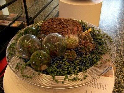 Dish garden plants: tips for designing a dish garden
