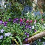 flower-garden-plants