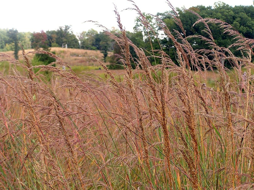 Types Of Grass In India 28 Images Oklahoma Prairie
