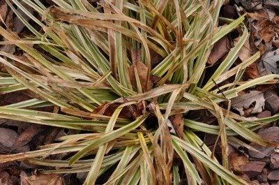 plant-damage