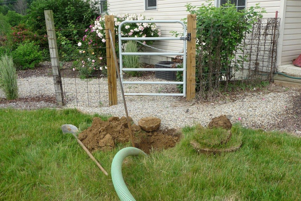 Septic System Gardening Info: Planting Gardens On Septic Drain Fields