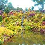color-garden