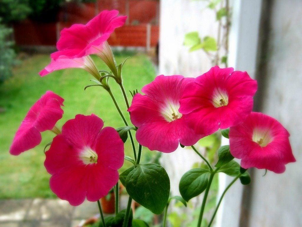 Pink Garden Design Gardening With Pink Plants