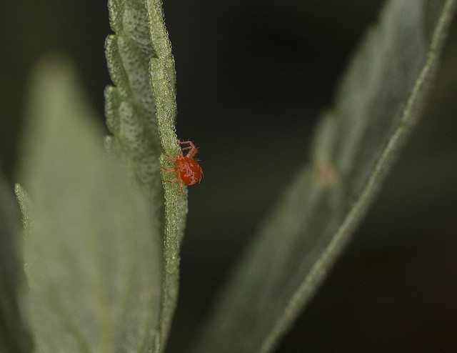Plant Mites Information About Mites On Garden Plants