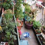 apartment-garden