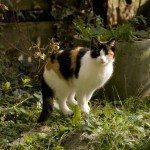 cat-in-garden