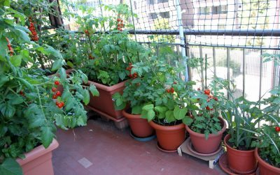 Apartment Gardening Guide U2013 Information On Apartment Gardening For Beginners