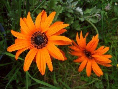 Orange garden design plants for an orange garden orange flowering plants how to design an orange garden scheme mightylinksfo