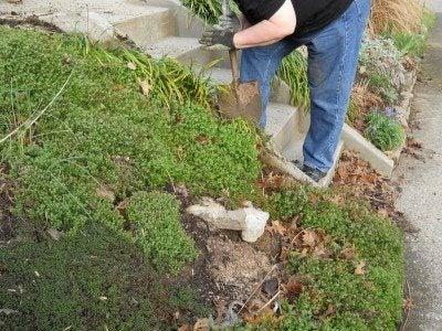 Monkey Grass Control: Best Way To Remove Monkey Grass