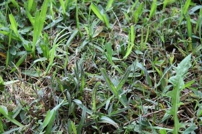 Lawn slime mold: how to prevent this black substance on lawns
