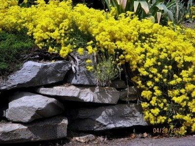 Yellow Color Schemes How To Create A Yellow Garden