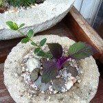hypertufa-planters