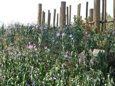 seaside-fence