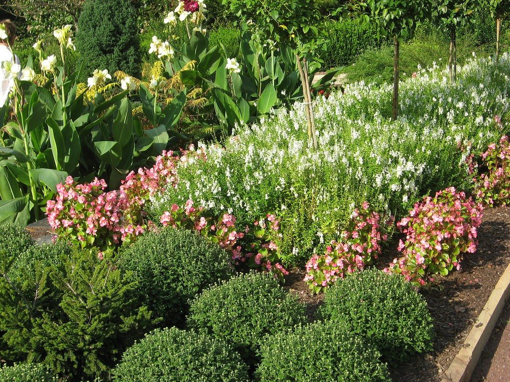 learn more about full sun in the garden how to use full sun plants efficiently - Sun Garden