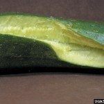 cracked-cucumber
