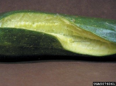 cracked-cucumber