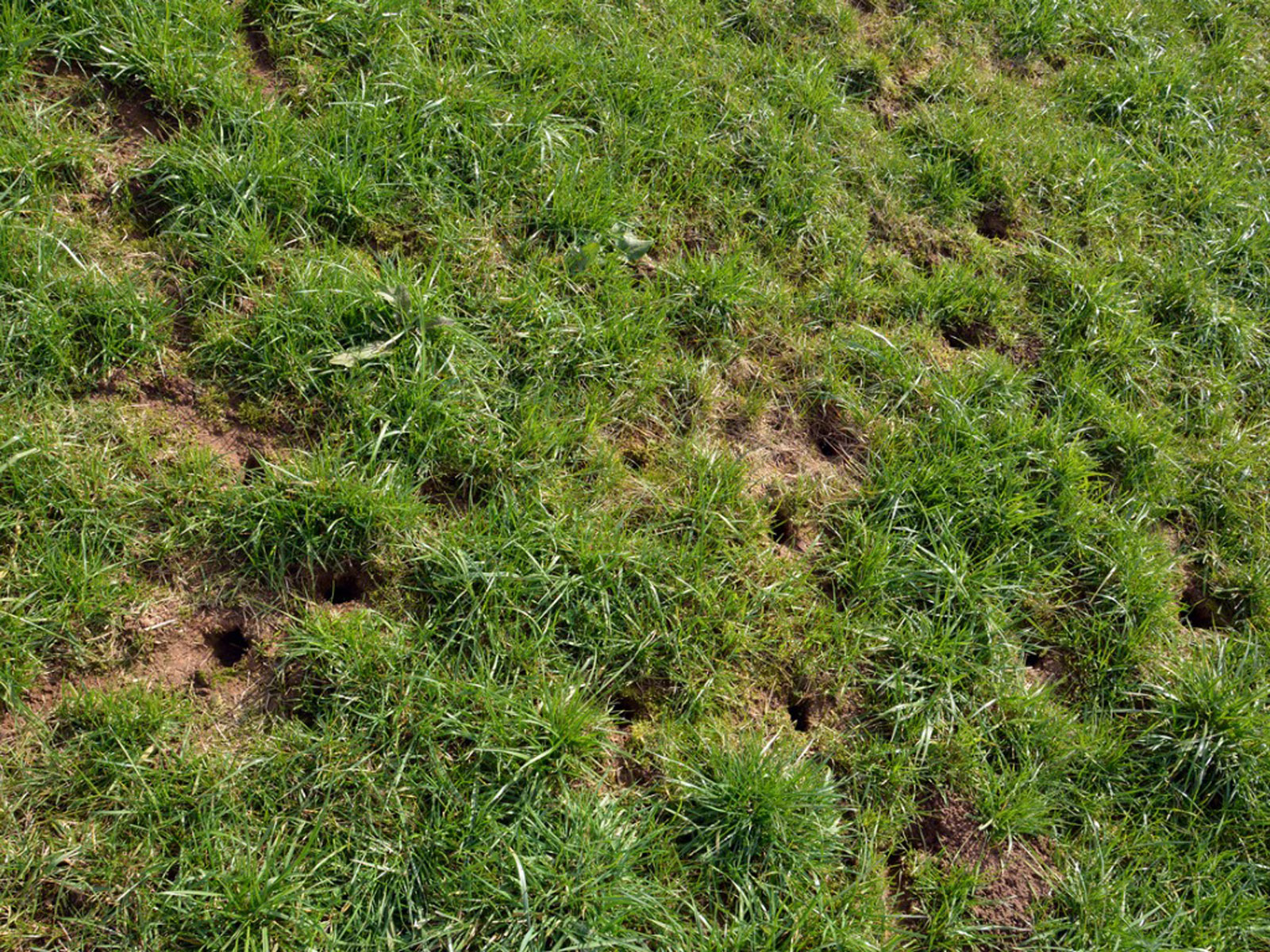 Small Holes In Yards - Tips For Identifying Holes ...
