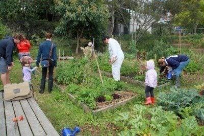 community garden information how to start a community garden - How To Start A Community Garden