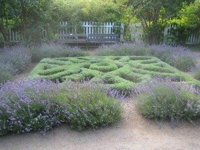 What Is An Herb Knot Garden: Growing A Small Kitchen Knot Garden