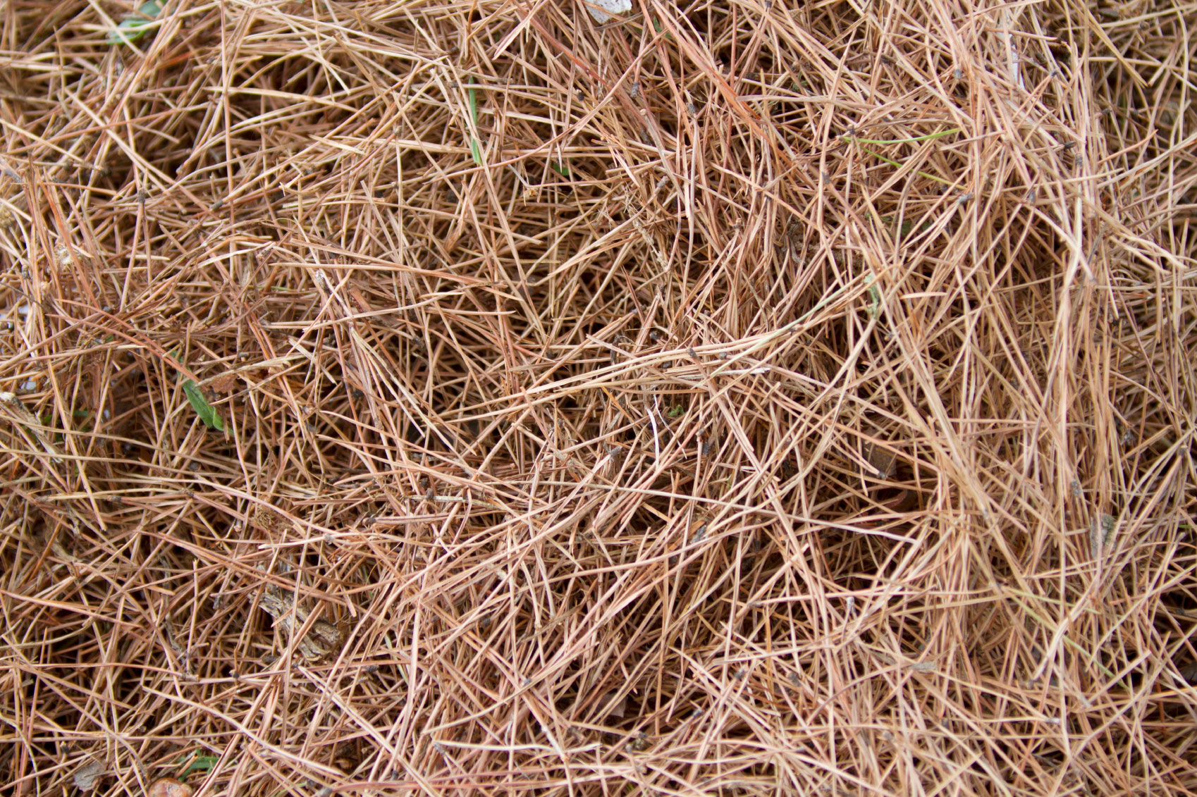 Pine Needles In Compost - Are Pine Needles Bad For Compost