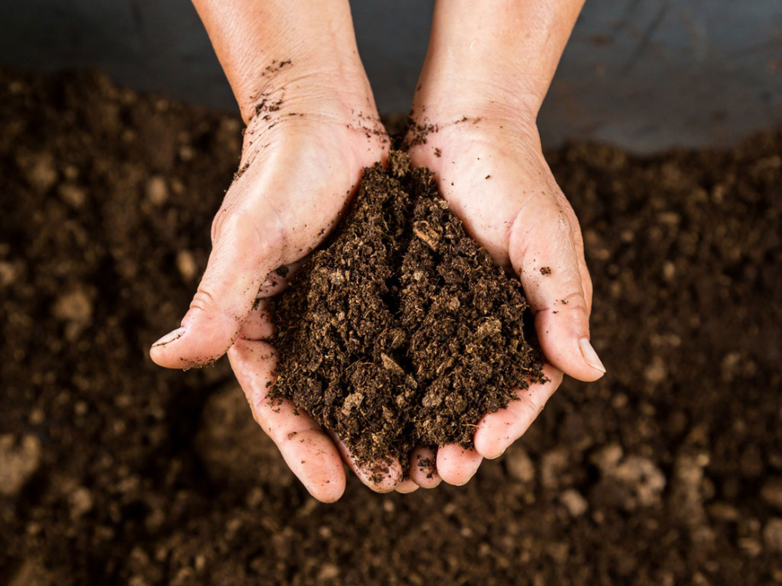 What Is Peat Moss: Tips For Using Peat Moss In Gardens