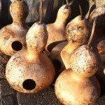 birdhouse-gourd