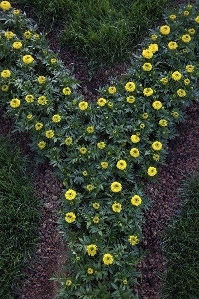 flowers y