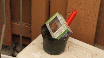 gladiolus-planting