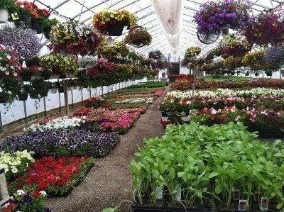 greenhouse-plants