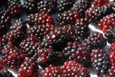marionberries