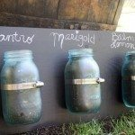 mason-jar-herbs