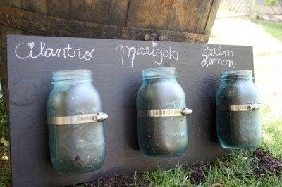 Creating A Jar Of Herbs How To Grow Herbs In A Mason Jar