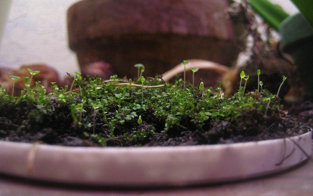 how to grow moss indoors tips for creating an indoor moss garden. Black Bedroom Furniture Sets. Home Design Ideas