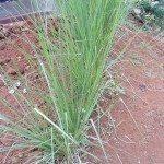 erosion-control-grass