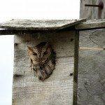 owl-box