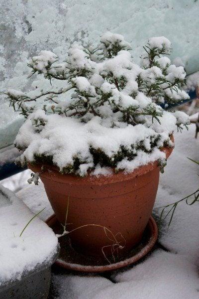 Zimovanie rastlín na balkóne alebo ako sa o nich postarať pred zimou?