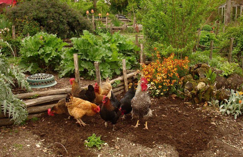 Beneficial wildlife information about helpful animals in for Garden animals
