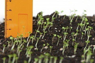 Plant Spacing