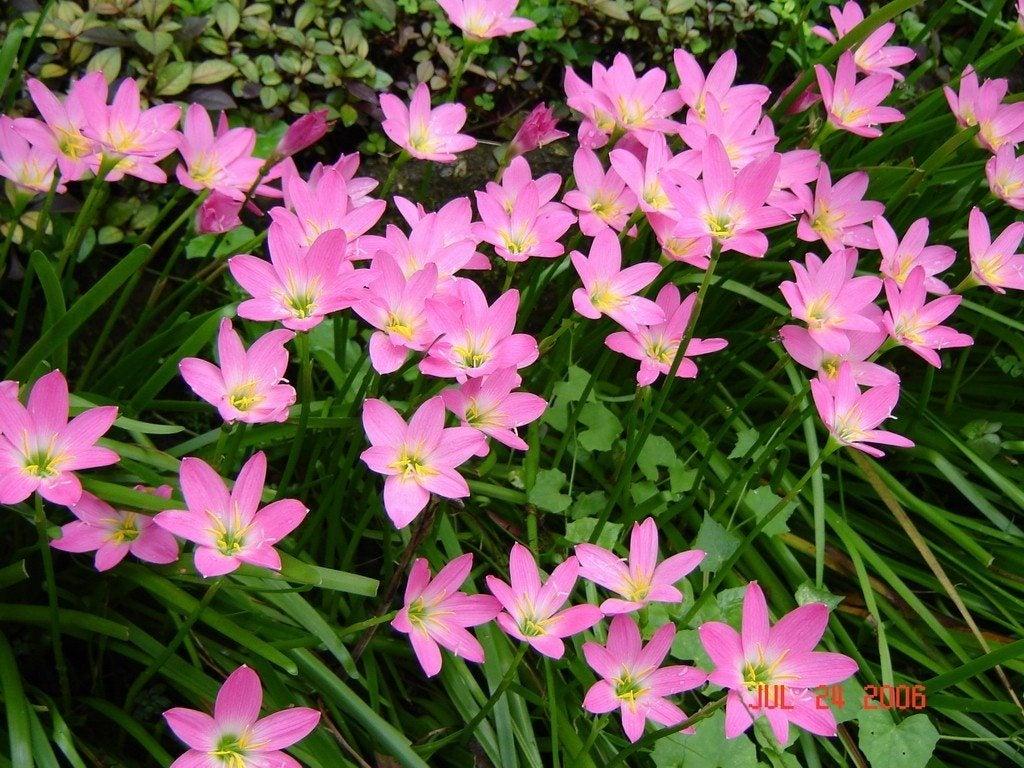 Fall Flower Bulbs – mon Bulbs That Flower In Fall Season