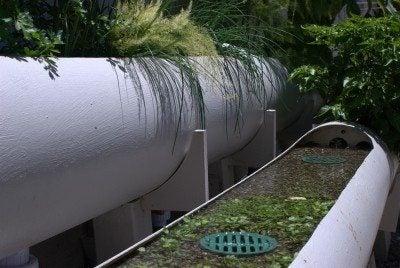 Aquaponics how to – information on backyard aquaponic gardens