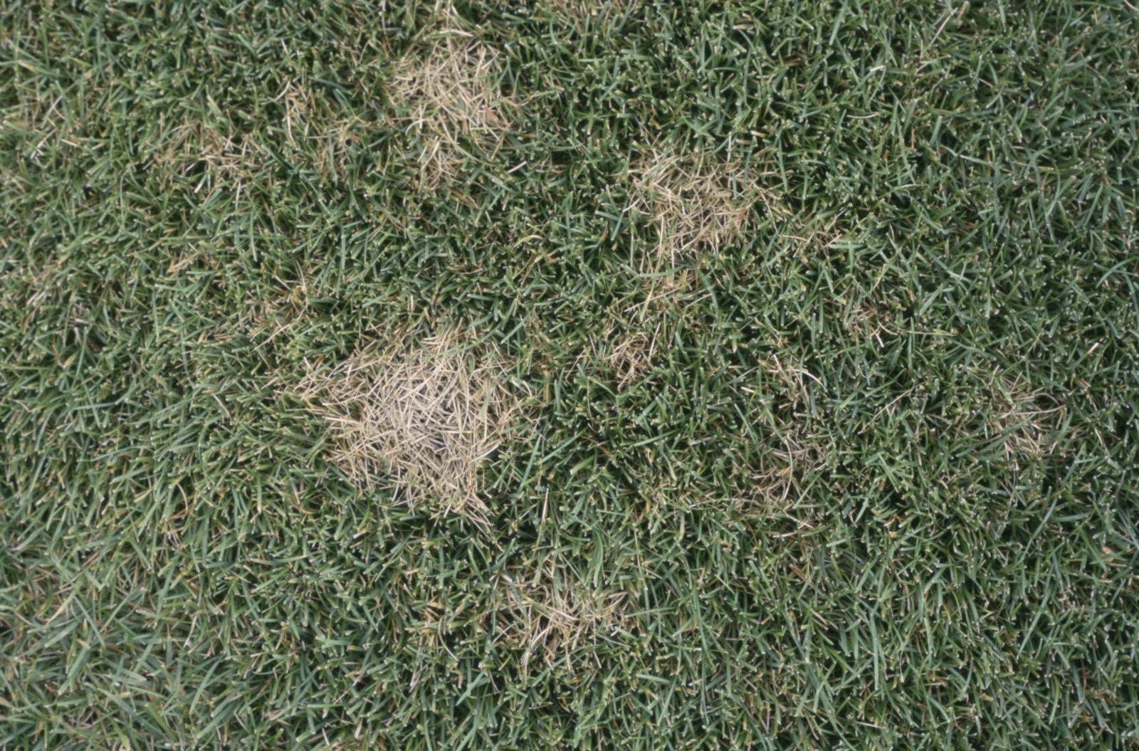dollar spot - How To Get Rid Of Spider Webs On Grass