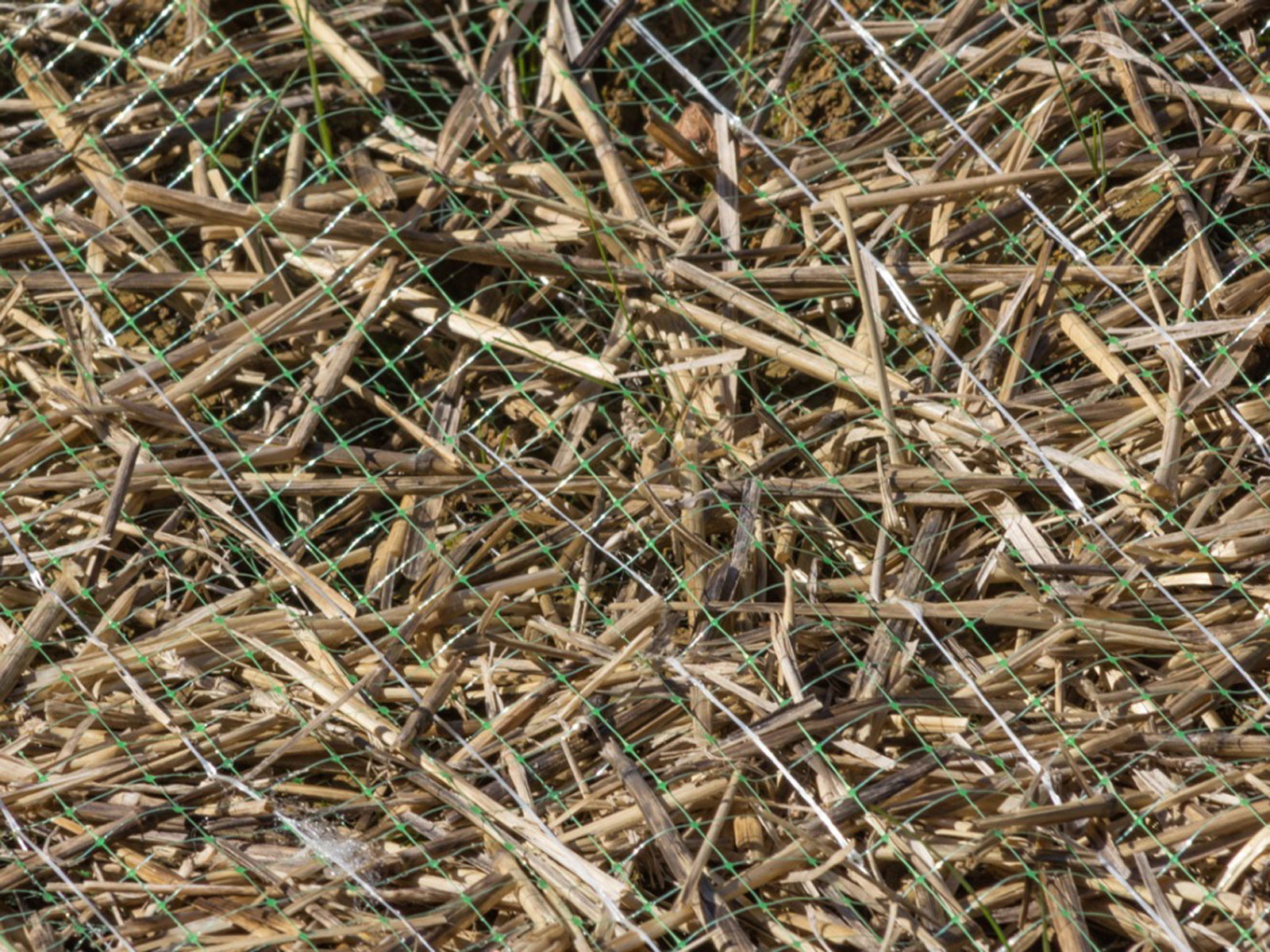 What Is Lawn Netting Types Of Netting For Landscaping