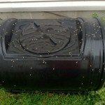 compost-maggots