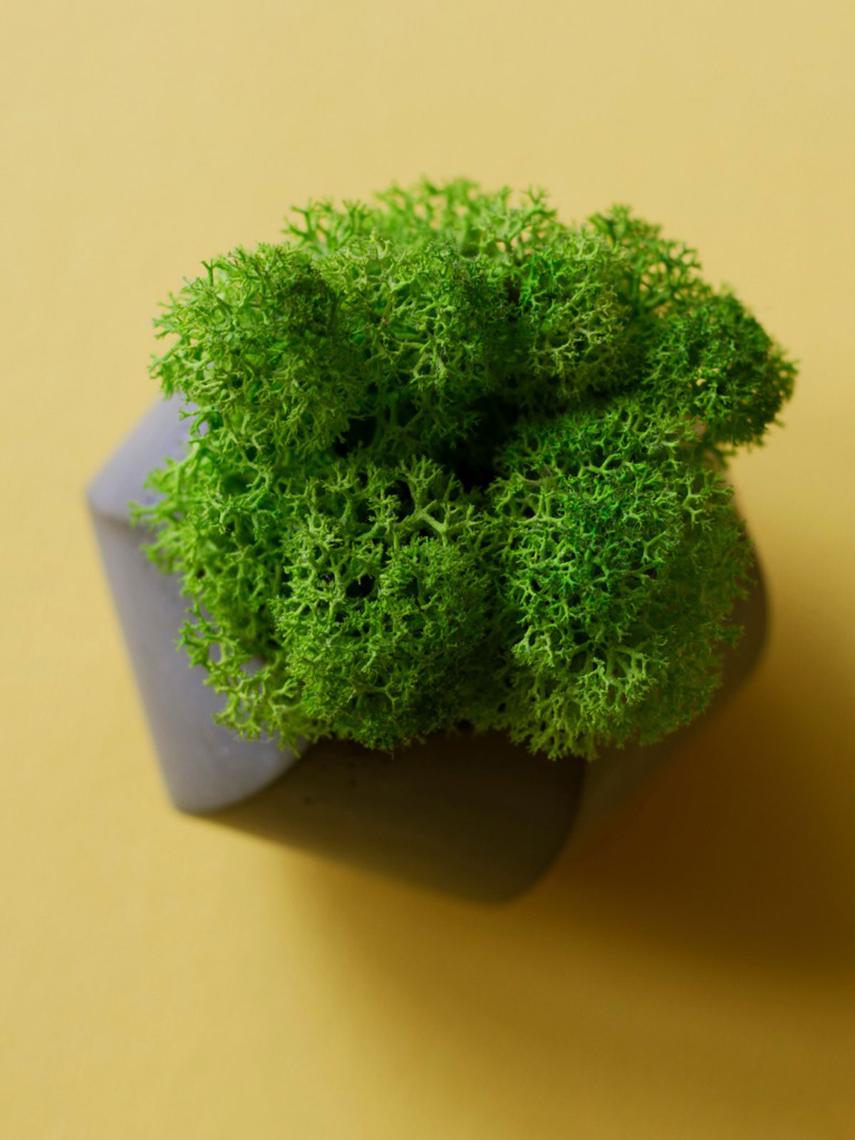 Tips For Creating An Indoor Moss Garden