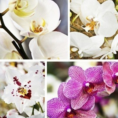 Various Orchid Flowers To Grow Indoors Diffe Types Of Orchids