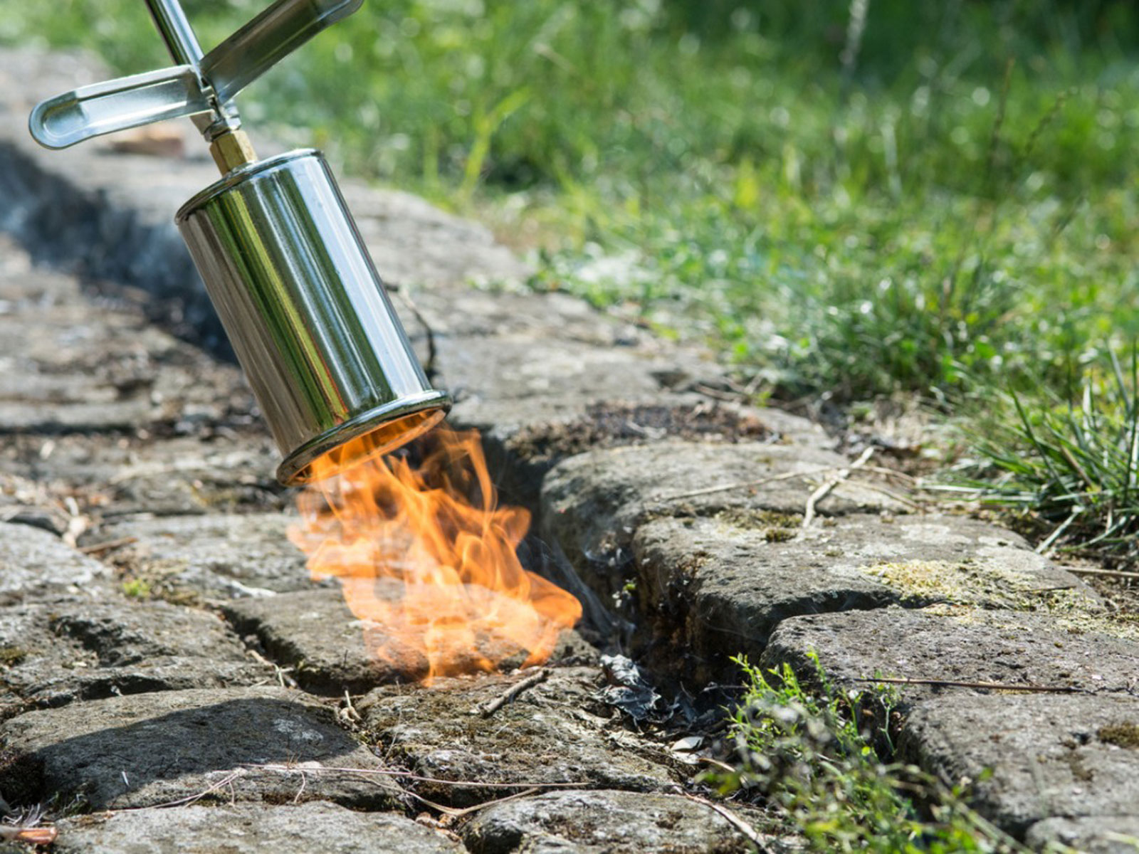 When Is Flame Weeding Suitable Tips On How To Use Flame Weeders