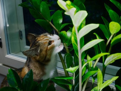 orange oil to keep cats away