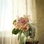 orchid-fertilize