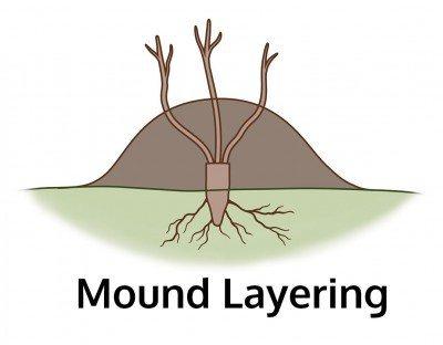Mounding
