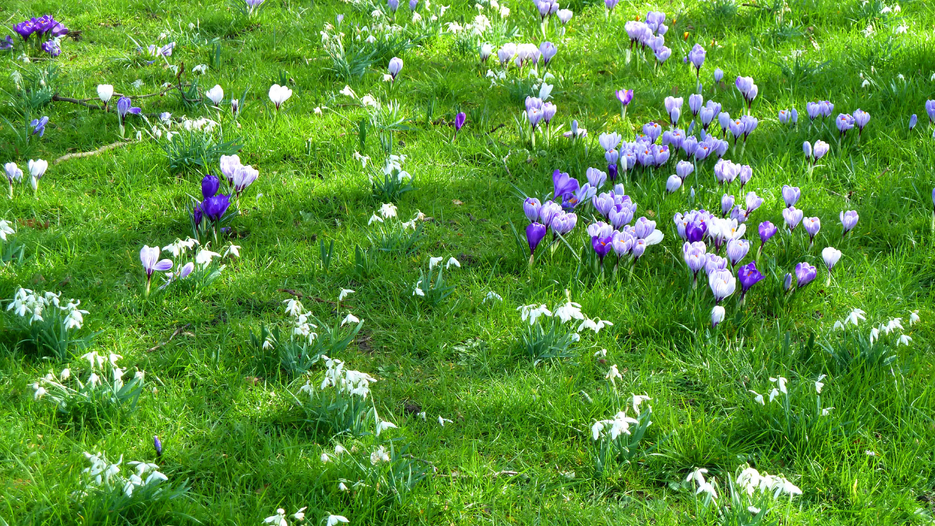 Mowing Maintenance Of Bulbs Tips For Mowing Bulbs In Lawn Areas
